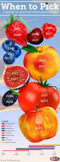 best 25 fruit picking ideas on pinterest cherry fruit cherries