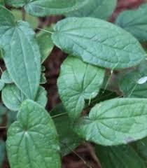 tanaman berkhasiat disekitar kita february 2013