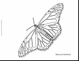 incredible coloring page butterfly drawings with butterflies