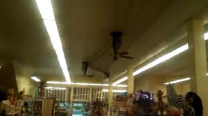 belt powered ceiling fan fanimation belt drive bourbon street ceiling fans in a pharmacy