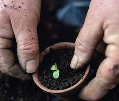 Soil Mix For Container Gardening - potting soil for indoor and container plants