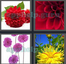 4 pics 1 word level 2401 to 2500 6 letters picture 2406 answer