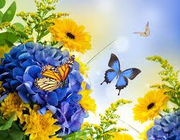 flowers flowers butterflies digital hydragea daisies blue colors