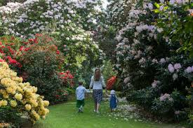 the scottish rhododendron festival 2017 a blooming lovely way to