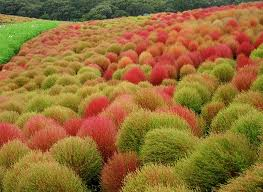 botanic notables autumn colors in a japanese flower park garden
