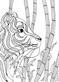 tiger colouring page colouring in sheets art u0026 craft