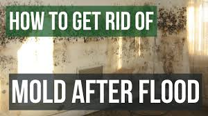 how to get rid of and prevent mold after flooding youtube