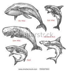 happy voracious cartoon hammerhead shark charming stock vector