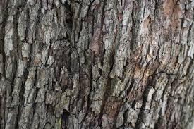 wood bark tree texture background pattern photo free