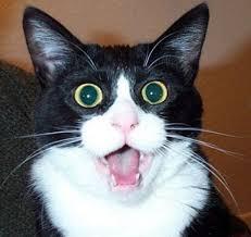 Surprised Meme Face - surprised cat face blank template imgflip