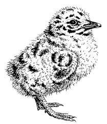 baby birds nest washington