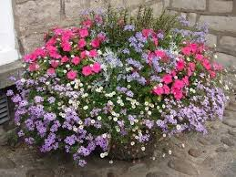 Plant Combination Ideas For Container Gardens - 52 best flowers plants ideas images on pinterest flowers
