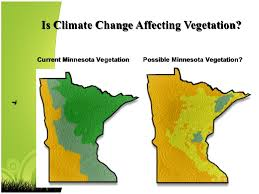 Minnesota vegetaion images Birds 101 jpg