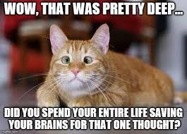 Stupid Cat Meme - that was deep imgflip