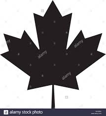 maple leaf green sign canadian pictogram stock vector art
