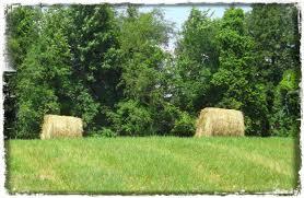 our backyard u2013 municipality of tweed
