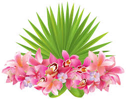 Tropical Flowering Plants Tropical Flowers Png Clipart Image Gallery Yopriceville High