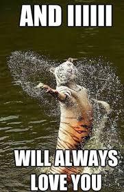 singing tiger meme