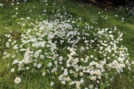 pushing daisies around kim thompson author