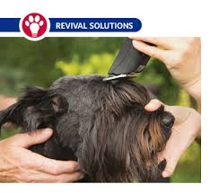 affenpinscher maltese mix pet grooming clipper blade chart size and use dog grooming