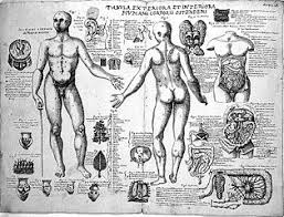 file anatomical sketches valverde anatomy early 17th century