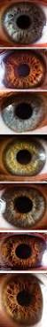 49 best eyes lesson images on pinterest halloween stuff happy