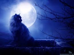 the most ideal 20 black cat in moon wallpaper picture best