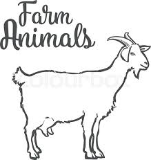 farm pet goat sketch drawn by hand cattle milk and goat meat