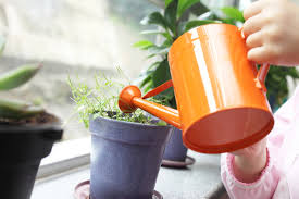 5 trouble shooting tips to keep your house plant alive mental floss