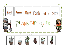 life cycle of a plant display banner teaching ideas pinterest