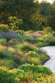 2249 best australian native plants images on pinterest native 341 best landscape architecture images on pinterest