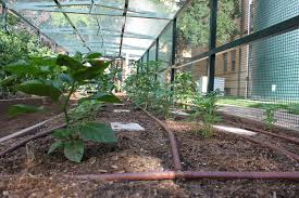 self sustaining garden jamail smith construction lp j s builds self sustaining