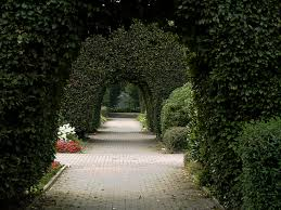 beautiful walkway with trees domain free photos for