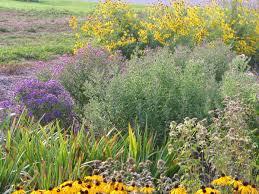 wisconsin native plants rain gardens u2013 dragonfly gardens