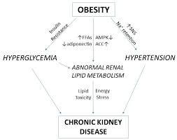 metabolites free full text obesity related chronic kidney
