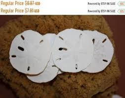 Where To Buy Sand Dollars 12 Off 12 Percent Off 10 Pcs Sand Dollars 1 1 2