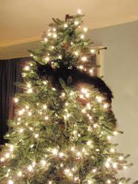 Cat Christmas Tree Meme - my mom sent me photos of her new christmas tree that cat seems to
