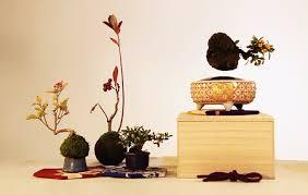 air bonsai create your