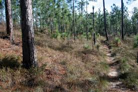 Hiking Maps Top 10 Hiking Trails In Florida Visit Florida