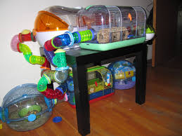Hamster Cages Petsmart Homemade Hamster Cages Google Search Things I Want For My