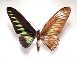 these butterfly wings are beautiful for a reason u2013 proof