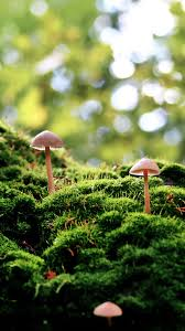 outdoor mushroom lights tap and get the free app nature mushrooms green wood forest