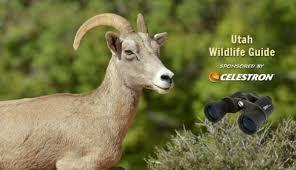 Utah wildlife images Utah wildlife my utah parks jpg