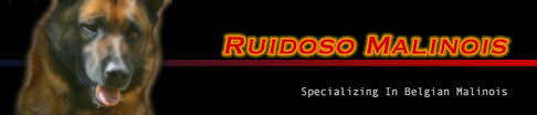 belgian shepherd el paso police dogs for sale belgian malinois k 9 police dogs ruidoso