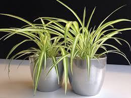 pflanzen für schlafzimmer bkk24 pflanzen im schlafzimmer