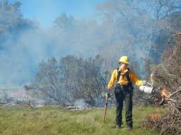 Wildfire Ranch by Acr U0027s Fire Ecologist Conducts Pile Burns To Reduce Fuel Load