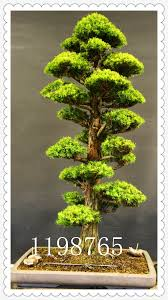 popular trees small buy cheap trees small lots from china trees