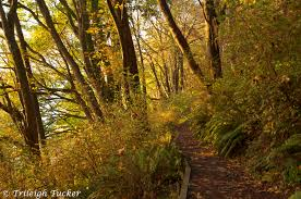 Lincoln Park Seattle Parks Hikes by Lincoln Park Trileigh Tucker