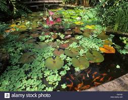 Botanical Gardens In Birmingham Al Birmingham Botanical Gardens Pond In Glass House Ponds
