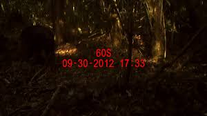 Turtle Back Zoo Lights by Chimp U0026 See Talk